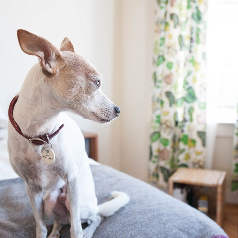 Gus the dog - Home Tour of Jen Hewett's apartment on Design*Sponge